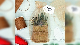 手工礼品创意:包裹多肉植物
